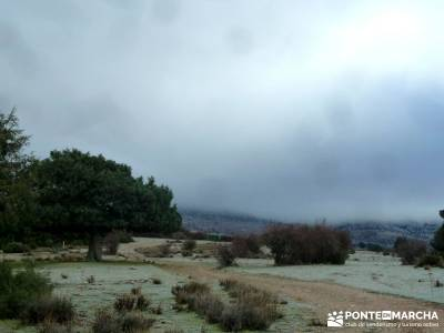 Acebos Montes Carpetanos; excursiones y senderismo; senderismo organizado